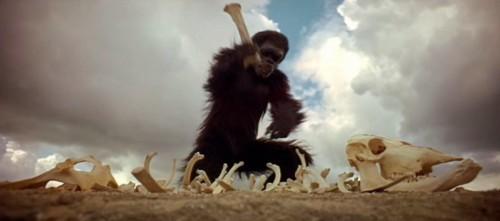 Immagine 11 scimmia intuizione.jpg